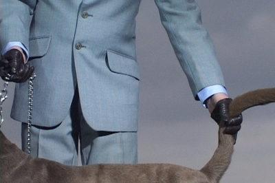 Annika Larsson, Dog, 2001, 1-Kanal-Videoinstallation (Farbe, Stereoton), Courtesy Sammlung Goetz, Medienkunst, München