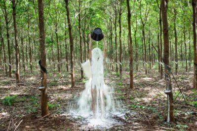 Khvay Samnang, Rubber Man, 2014, Digital C-Print, Courtesy of Artist